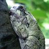 artsy_frog userpic