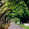 tree path glee!