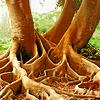 florafloraflora
