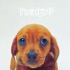 alas_adios: puppy))