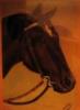 лошадь))