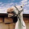 коняшко