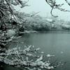 snow on pines