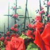 [utena] no raindrops on roses