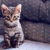 Kitten on sofa