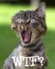 WTF Kitty