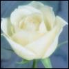 joy_of_roses userpic