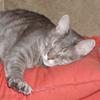 tristancat userpic