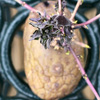 potatojunket userpic