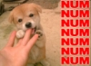 junowasmad userpic