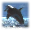 orca77 userpic