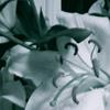 darklily userpic