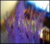 violet flying