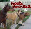Hood Houndz