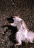 squirreldiaries userpic