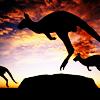 Australia - kangaroo