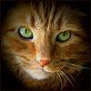 Жизнь за открытой дверью: cat : guilt