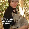 Annika: P!ATD: Ry/Koala