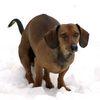 ru_dog_prokhor userpic