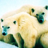 Jannicke: isbjørn klem