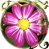 Round daisy