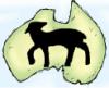 aussie_lambs