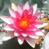 fleur_de_liz userpic
