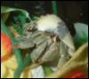 afungusamongus userpic