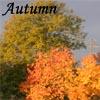 Tels: autumn