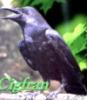 cigfran_cg userpic