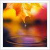 autumn leaf by bonjour_labelle