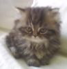 cat little