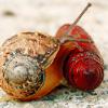 snail cutie by cardcaptur <3