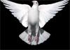 Sexy Dove