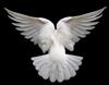 Dove Back