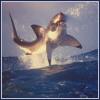 sharkflip userpic