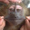улыбка обезьяны