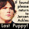 JP: Lost puppy! If found return to JA