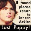 JP: Lost puppy! If found return to JA
