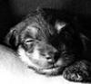 Baby Tito