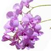 Beautiful flower (lavender)
