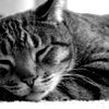 Kitty nap close-up
