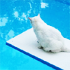 Kitty gazing into pool