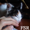 faithfulreader userpic