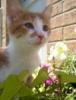 kittylucy userpic