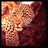leopardesspots userpic