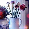 homecharms userpic
