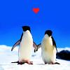 Katie: Other: Penguin love