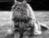 kitkat_cat userpic