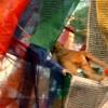 tipper_green userpic